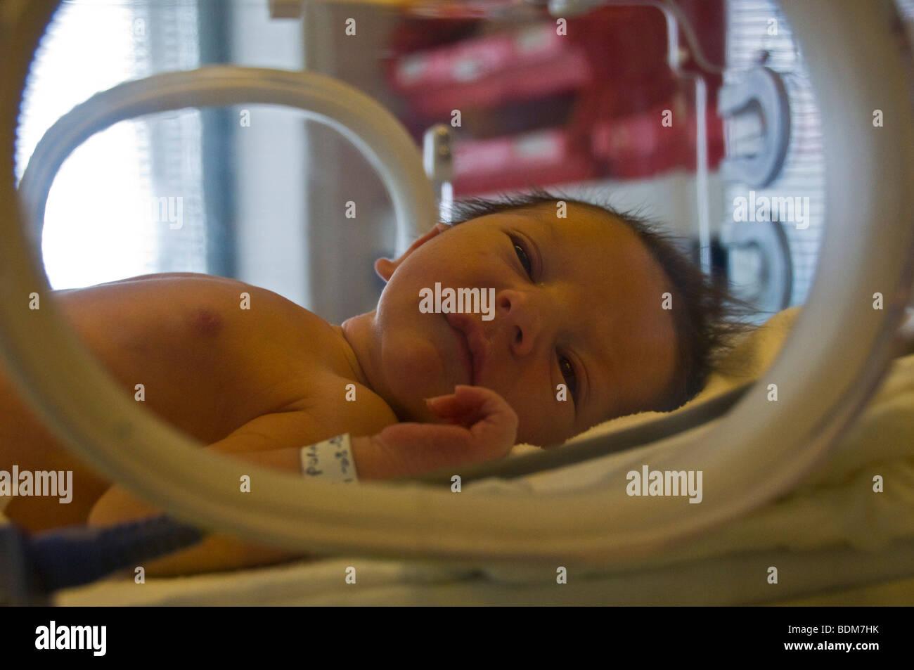 Newborn in an incubator - Stock Image