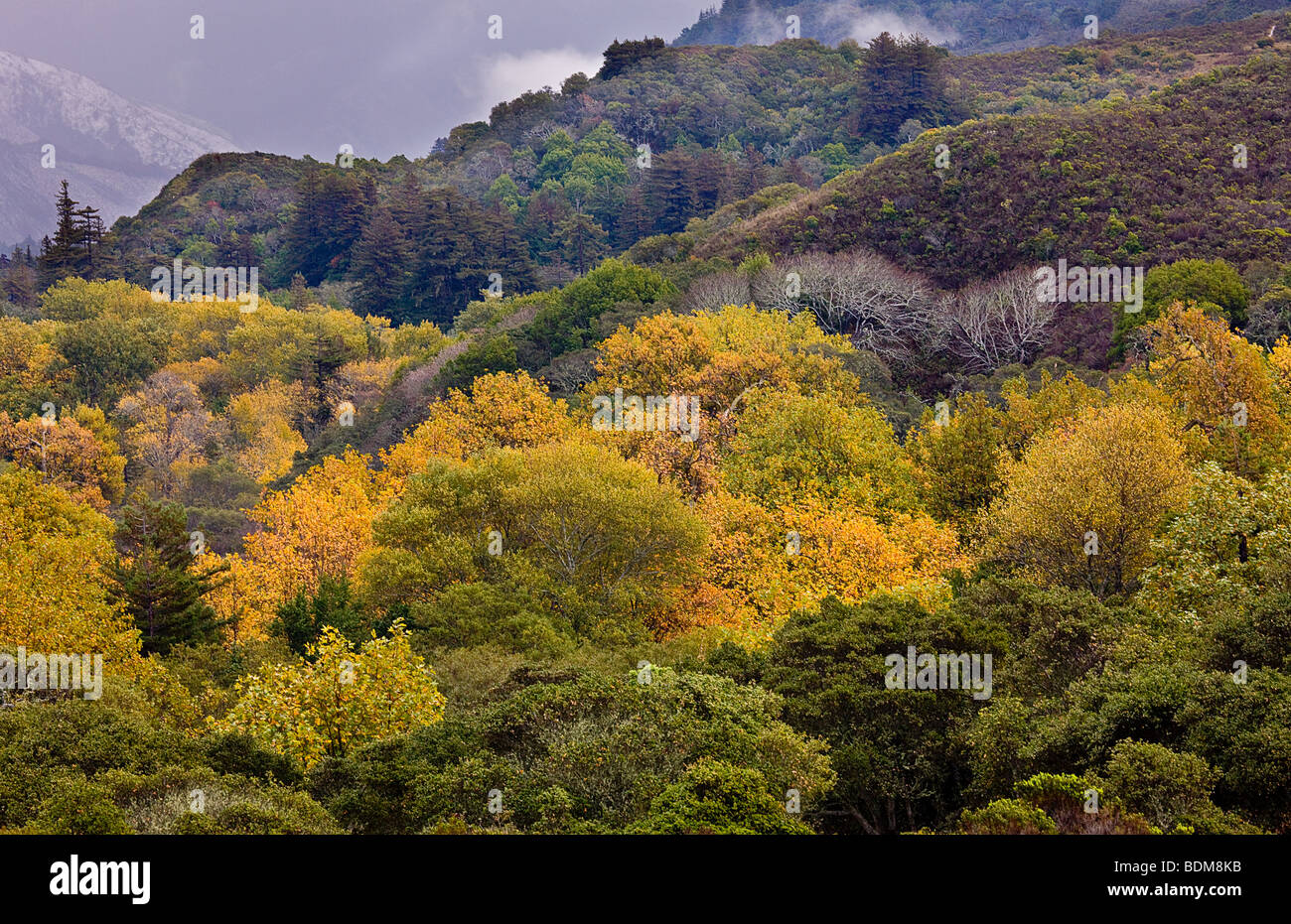 Fall color and clearing snow storm, Andrew Molera State Park, Big Sur, California, USA. - Stock Image