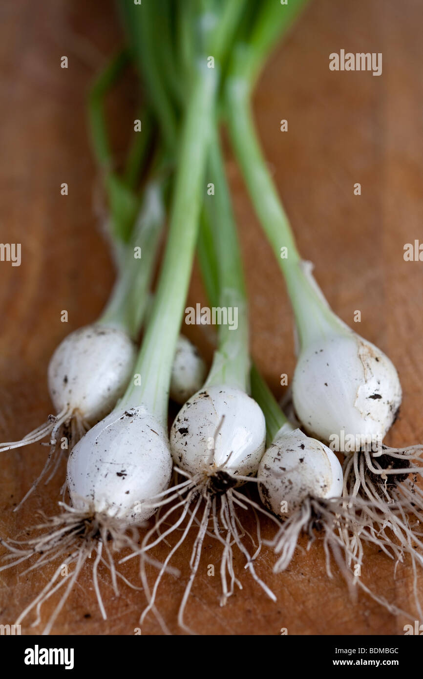 Homegrown Spring Onions - Stock Image