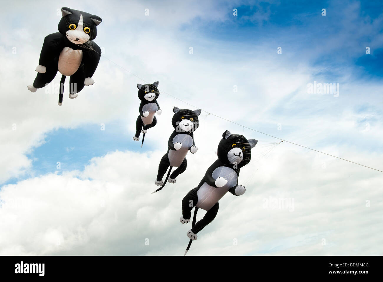kites, cat and kittens - Stock Image