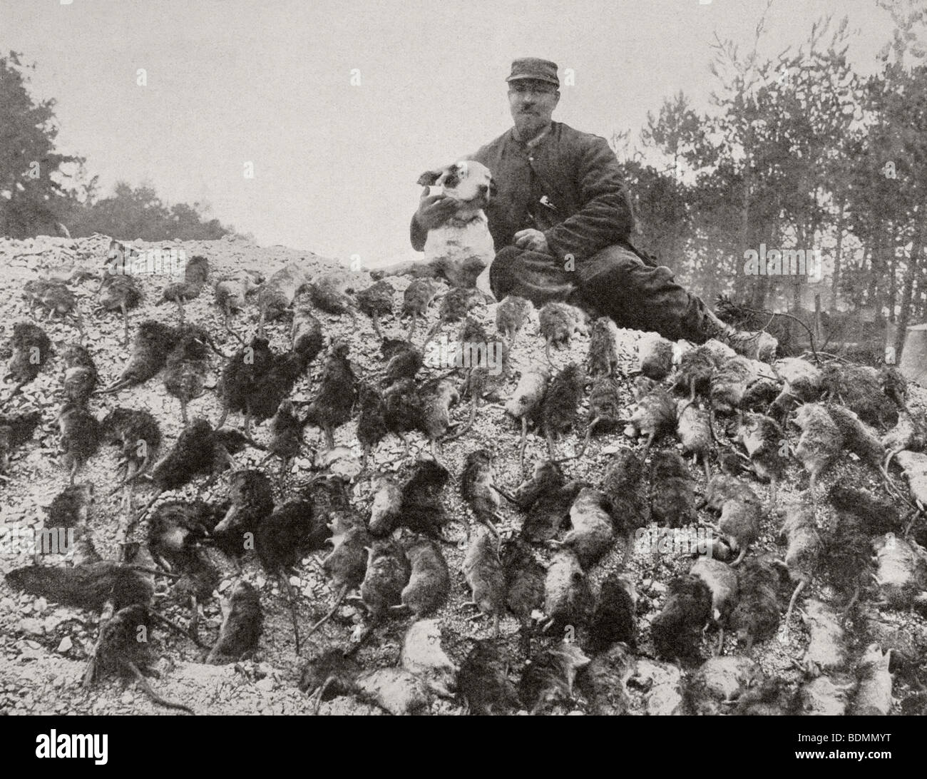 Ratcatcher with his catch from the trenches during First World War. - Stock Image