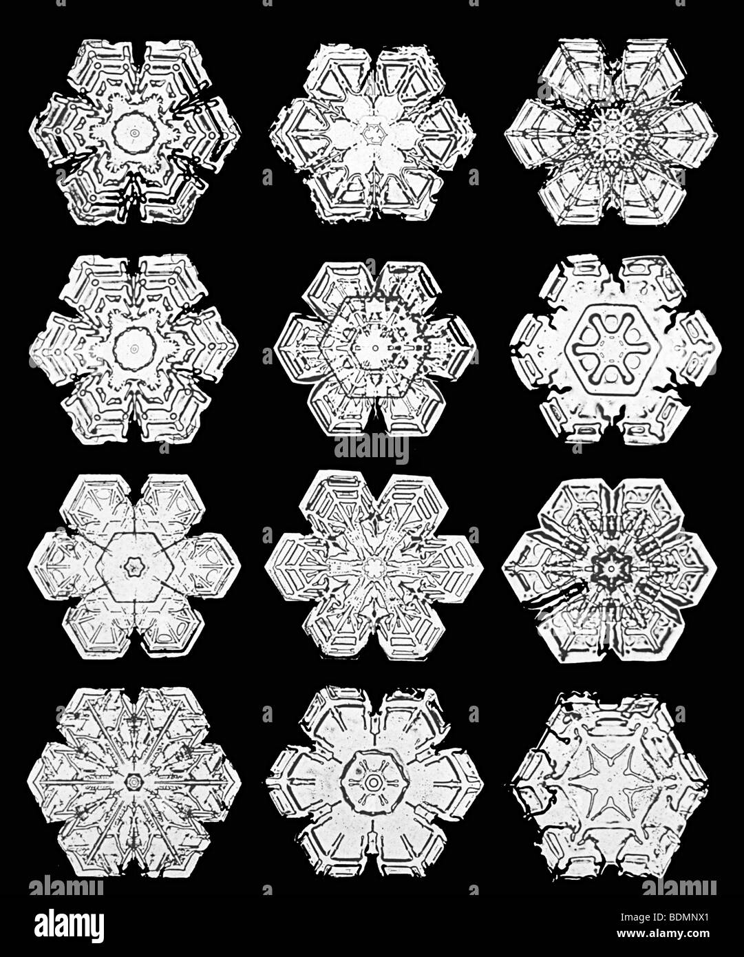 Snowflakes Photographed By Wilson Bentley In The Early 1900 S Stock