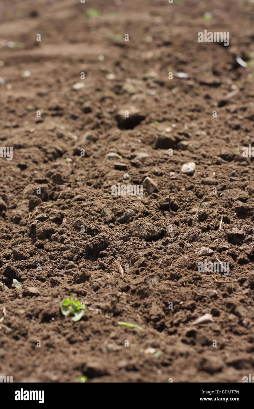 freshly cultivated garden soil ready for planting narrow dof stock image - Garden Dirt