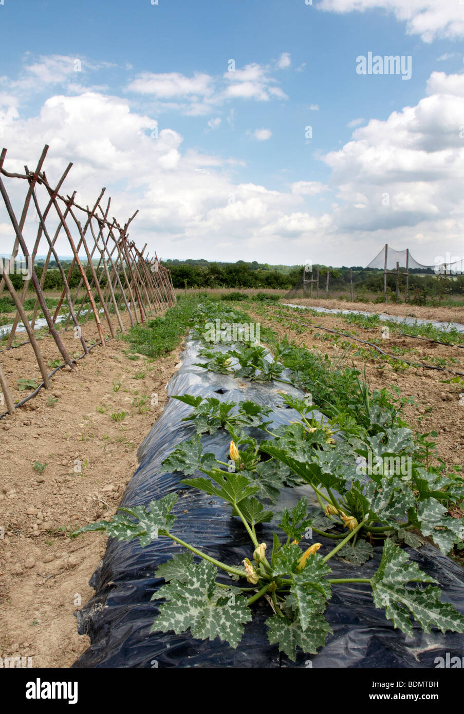 A vegetable garden in the Kent countryside - Stock Image