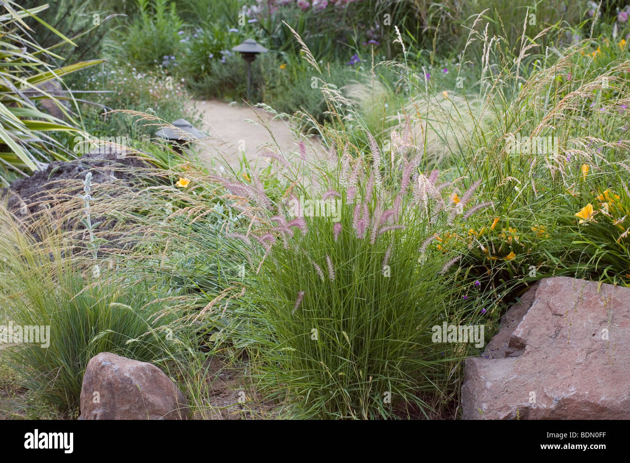 Grasses Pennisetum In California Meadow Garden Design Richard