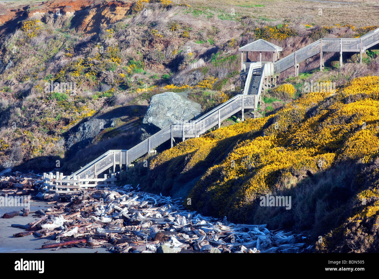 Stairway to beach at Bandon beach, Oregon with blooming gorse. - Stock Image