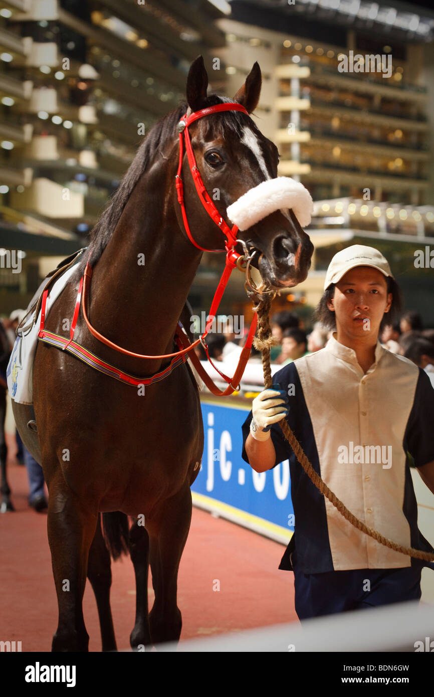 A race horse and handler in the parade ring at a night horse racing event at Happy Valley race course in Hong Hong. - Stock Image