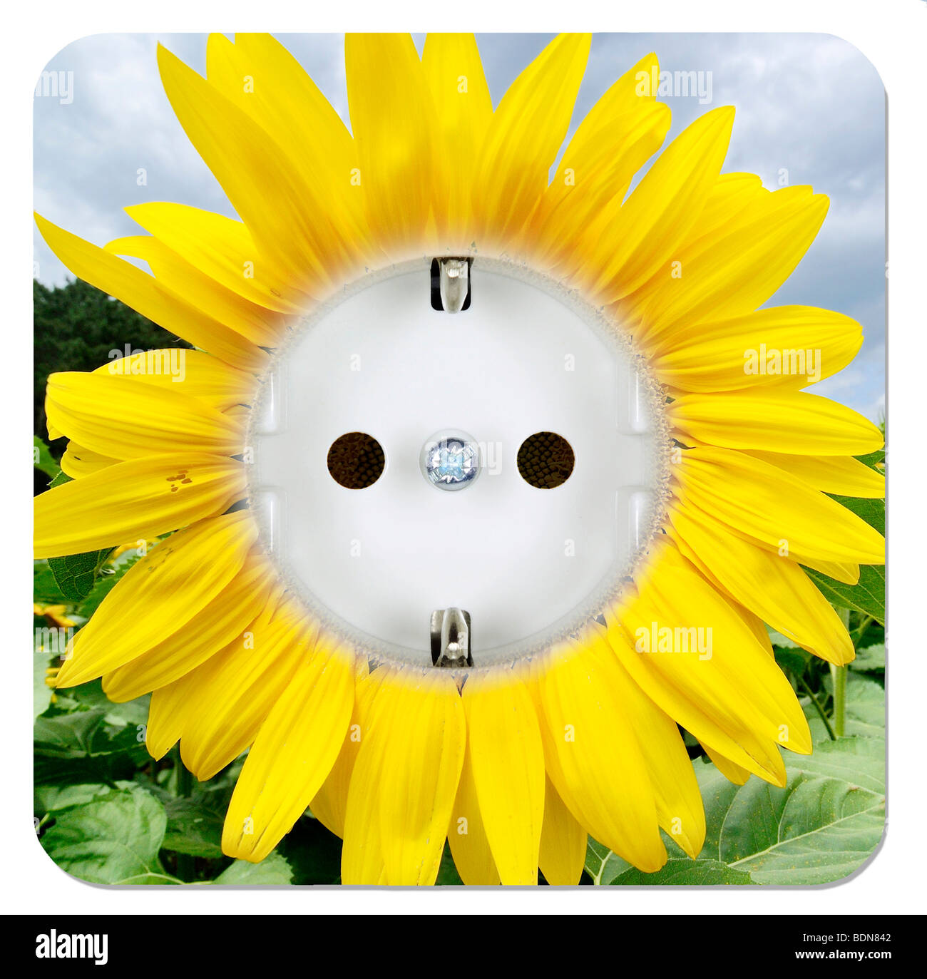 Green power outlet in the form of a sunflower - Stock Image