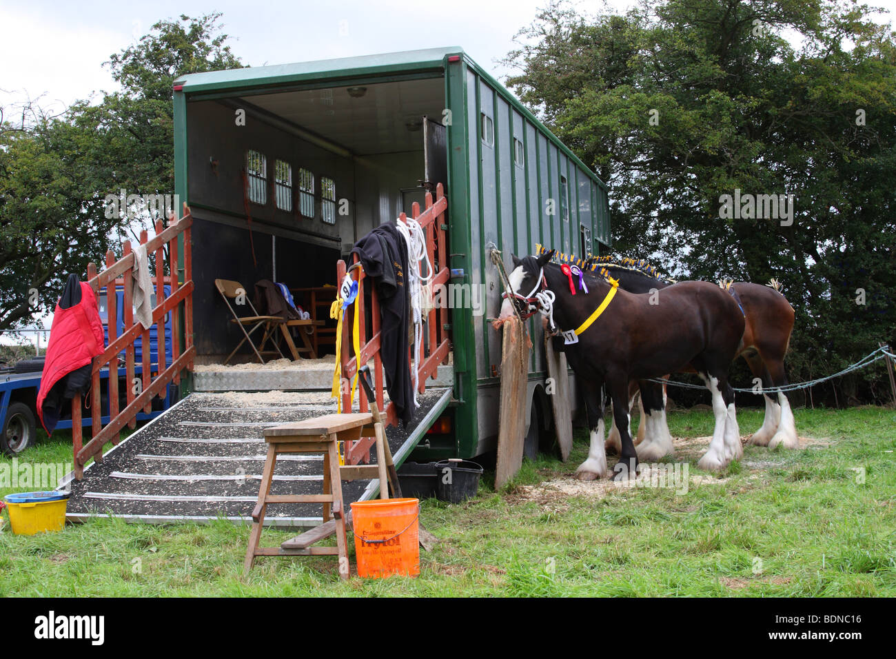 Horses tethered to a horse box at the Moorgreen Show, Moorgreen, Nottinghamshire, England, U.K. - Stock Image