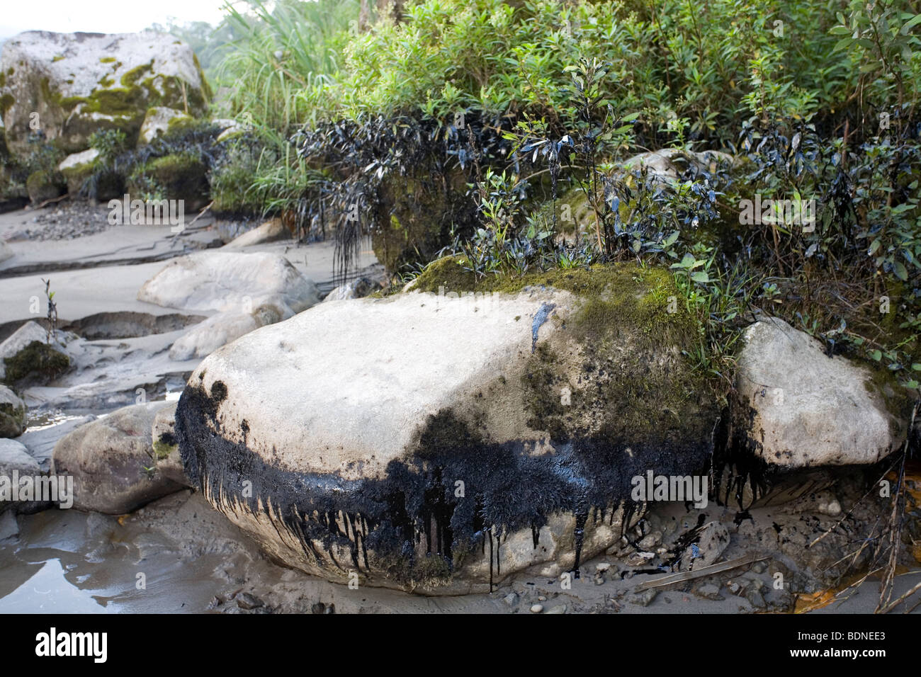 Crude oil on a riverbank following an oil spill in an Amazonian river - Stock Image
