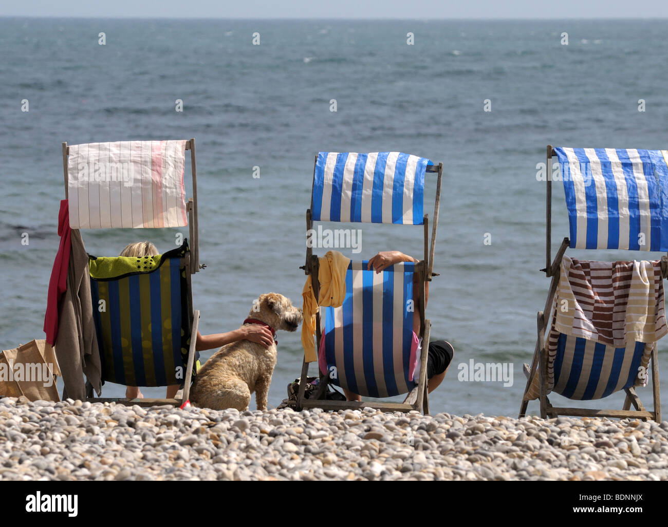 Relaxing On Deck Chairs With Pet Dog On The Beach At Beer Devon England