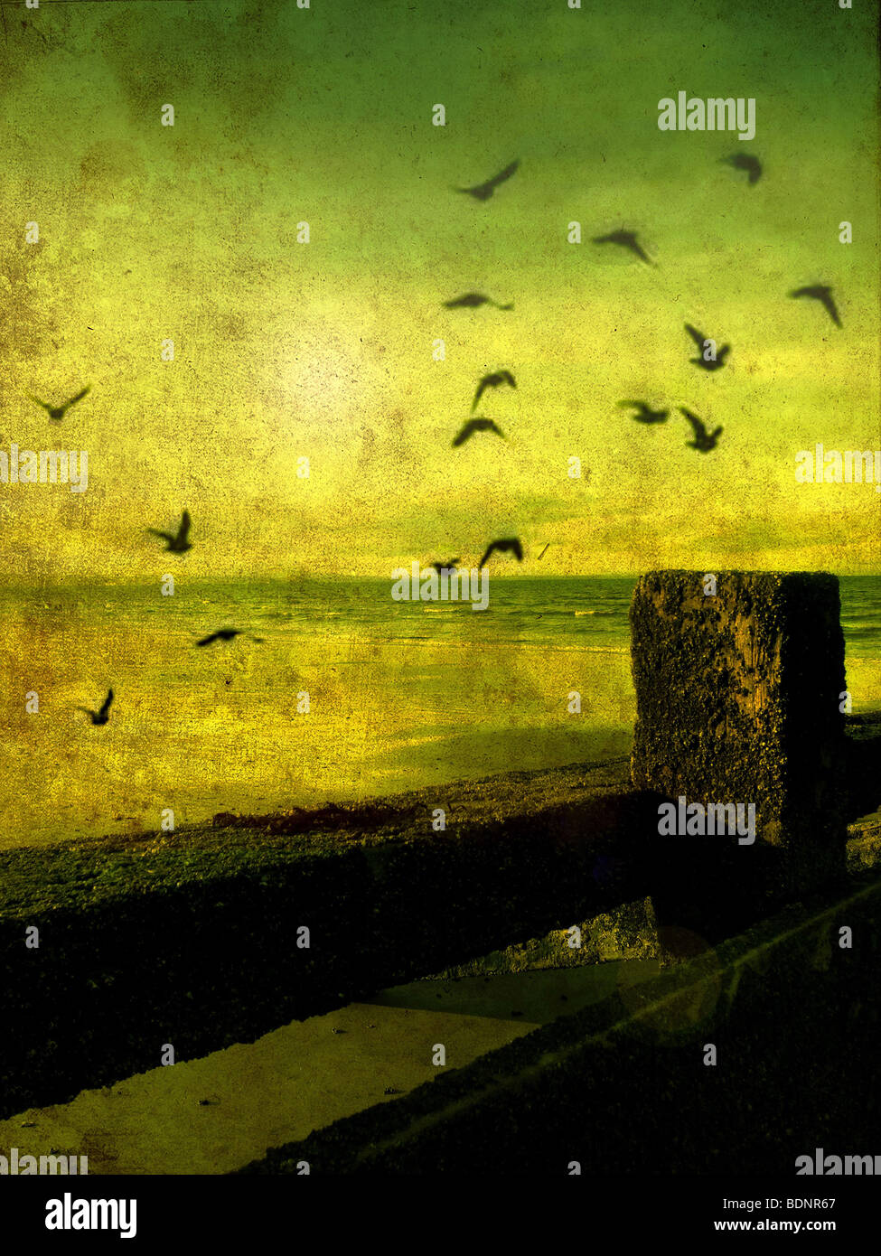 A flock of birds flying over a beach scene with breakers - Stock Image