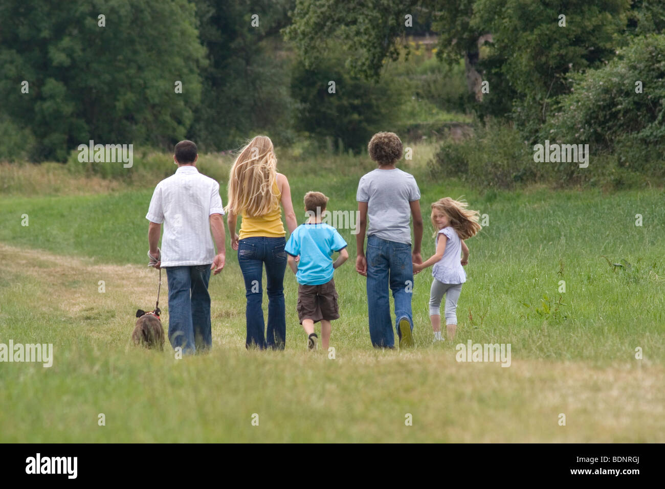 back of young family walking in countryside with brindle staffordshire bull terrier dog, daughter turning head to - Stock Image