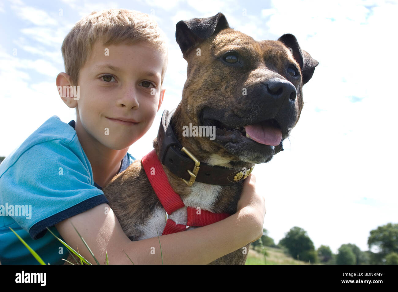 young boy outdoors with his staffordshire bull terrier - Stock Image