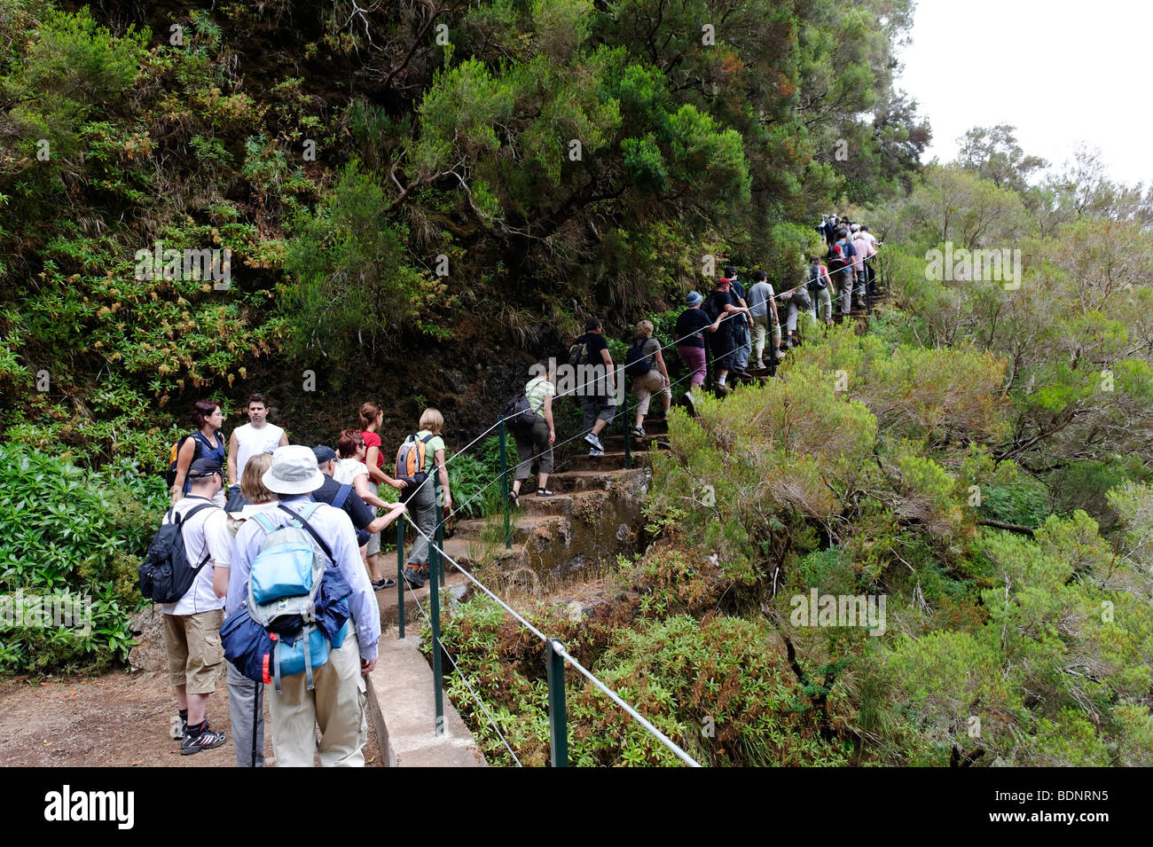 Guided hiking tour to the 25 sources, Fontes, in the Parque Natural de Madeira, Portugal, Europe - Stock Image