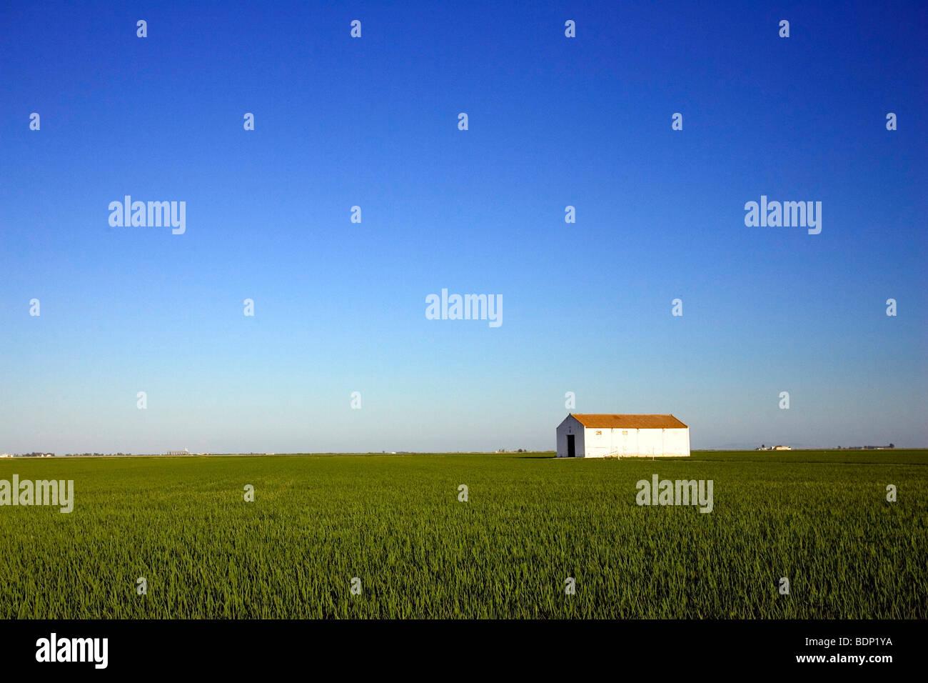 A barn on the rice fields, Isla Mayor, Donana marshland, Spain - Stock Image