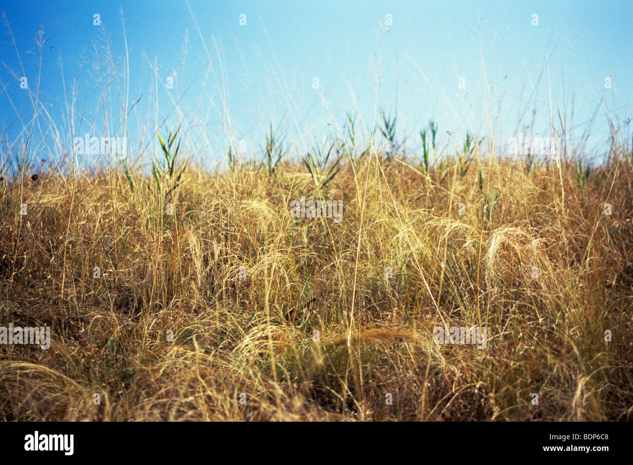 background with beautiful, colored plants in countryside Europe Stock Photo