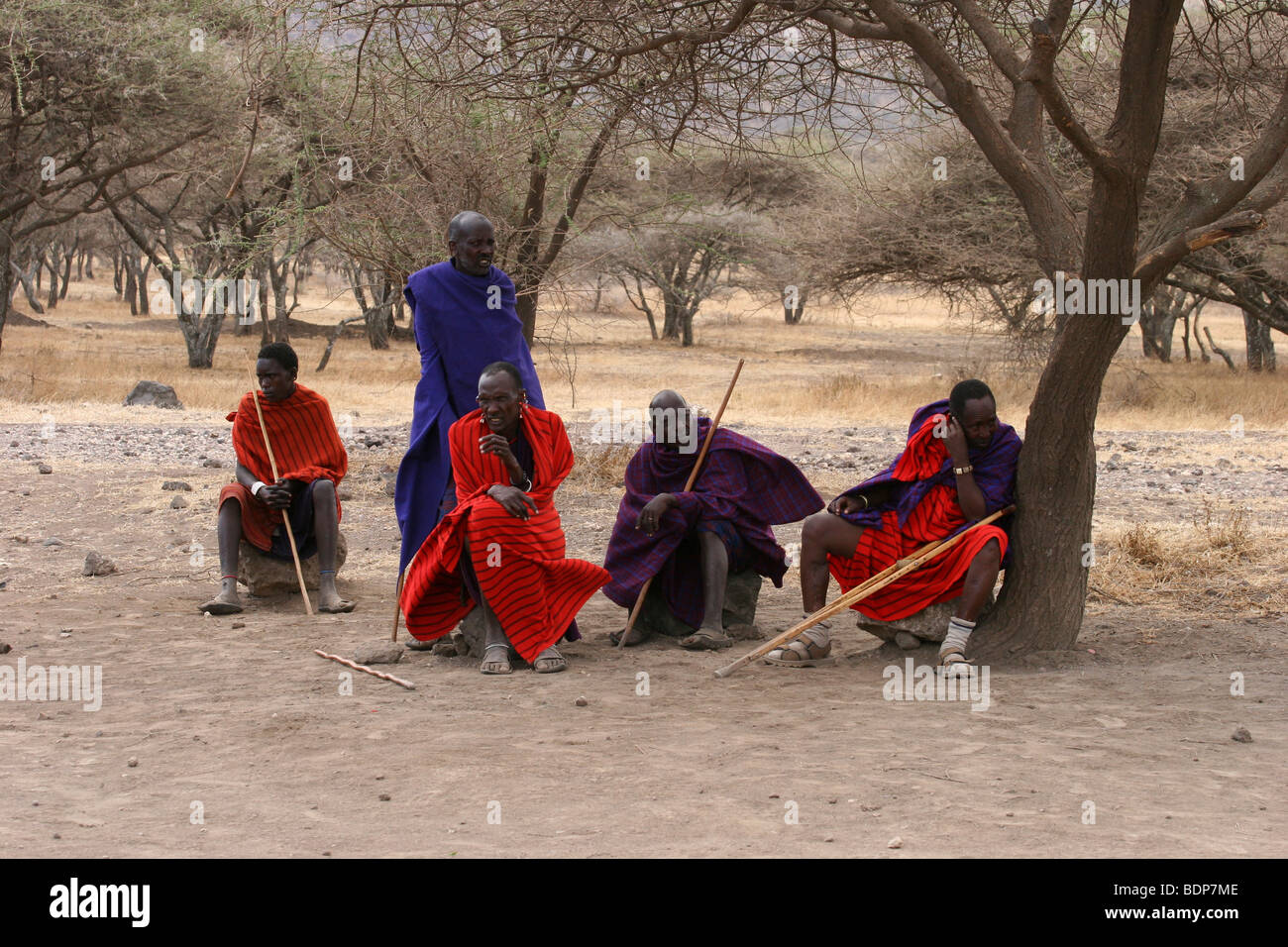 Africa, Tanzania, Maasai an ethnic group of semi-nomadic people. Men at rest in the shade of an acacia tree - Stock Image