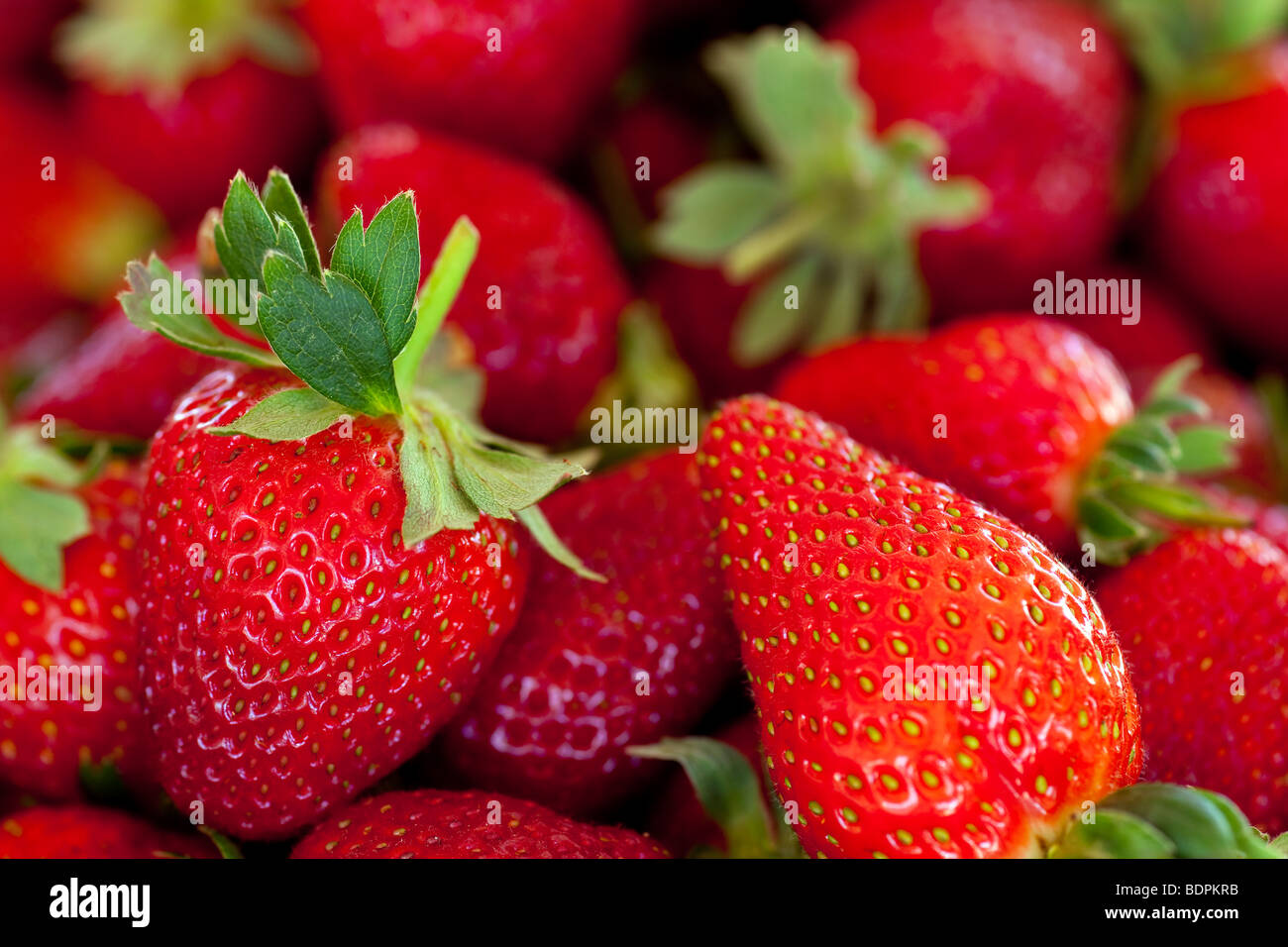 ripe red strawberries with stems and leaves - Stock Image