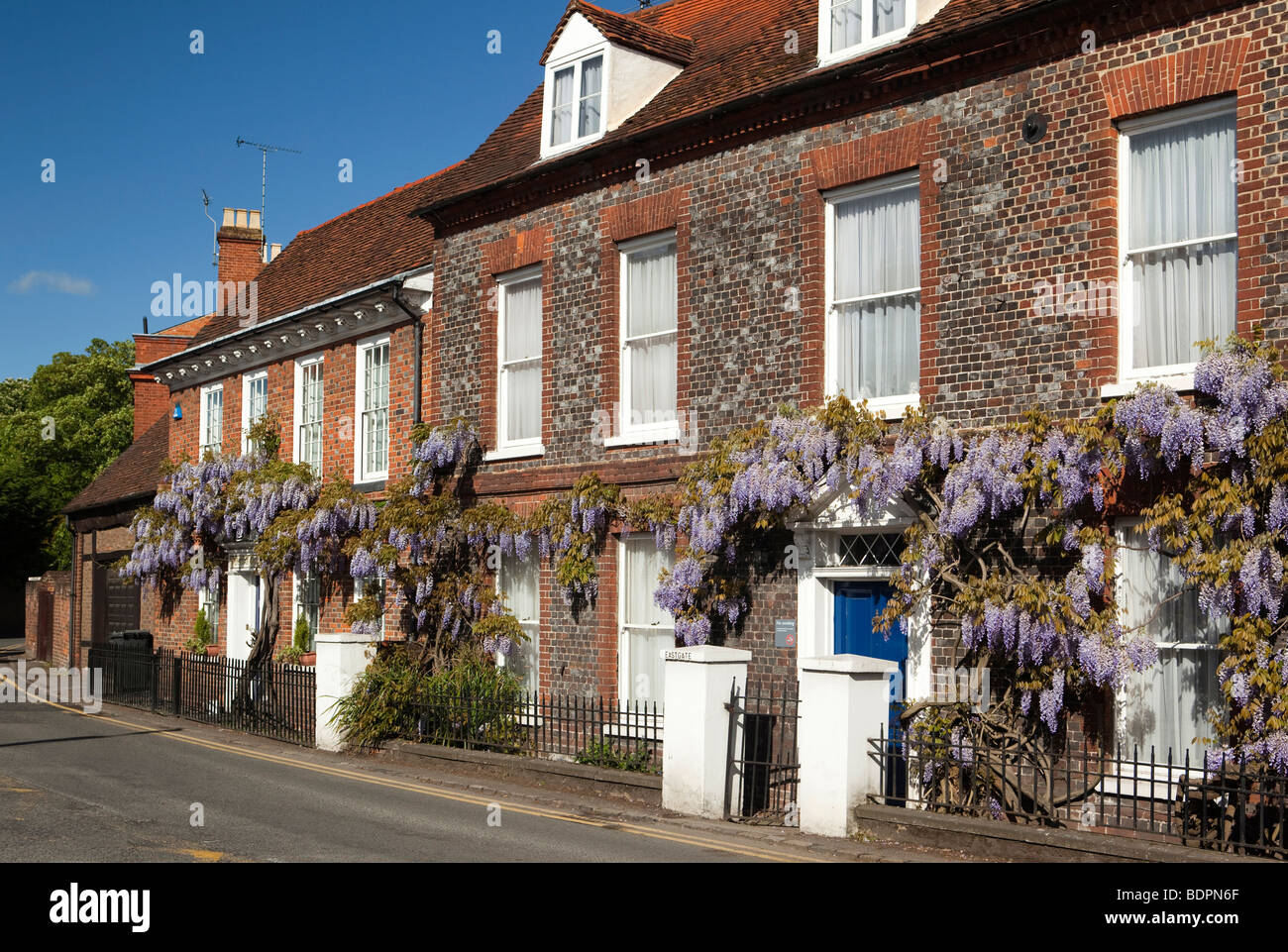 England, Berkshire, Cookham, Sutton Road, Wistaria Cottage, Wisteria hung front of Eastgate John Lewis building - Stock Image