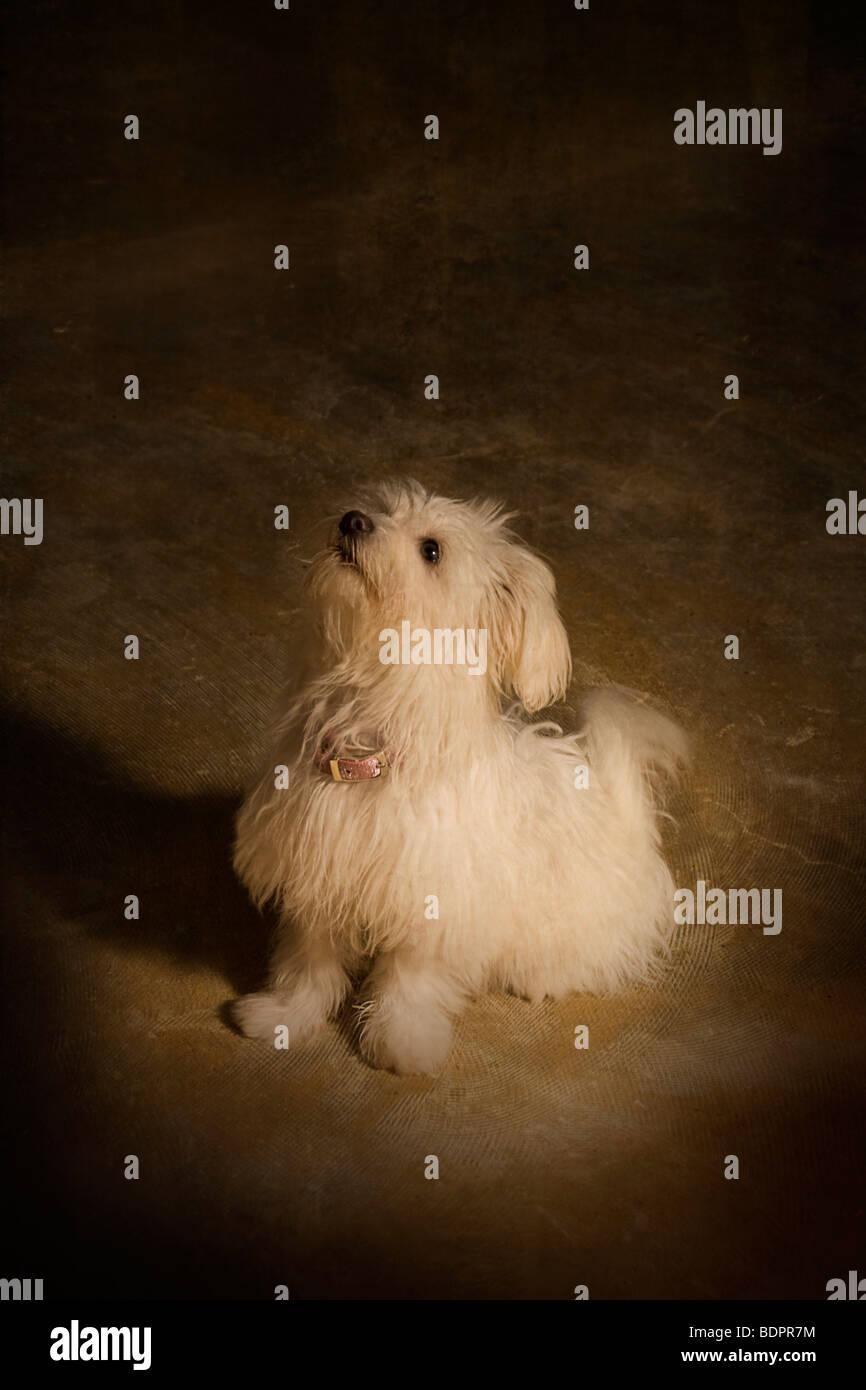 Daisy the cute dog - Stock Image