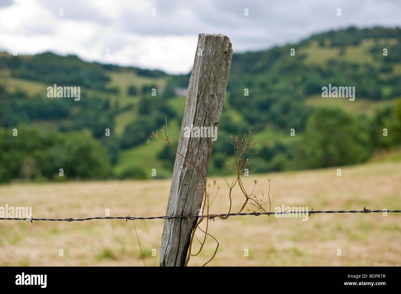 fence post - Stock Image