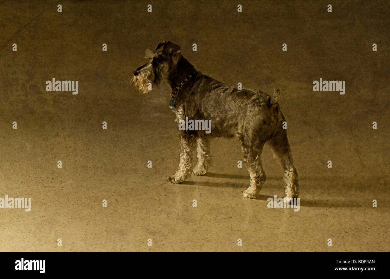 A small dog waiting - Stock Image