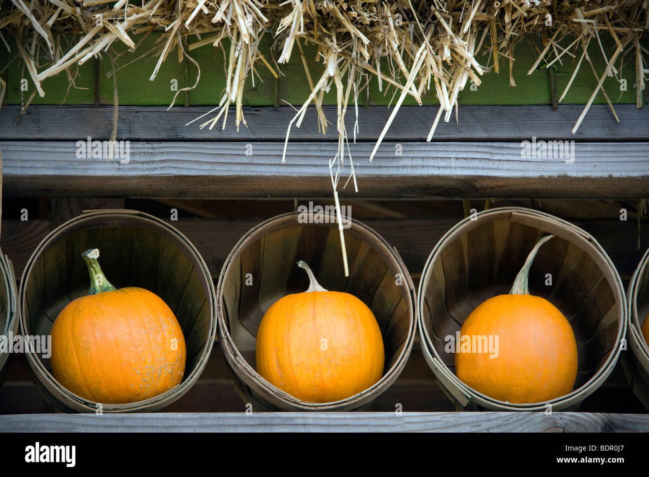 Pumpkins in baskets. Al's Garden Nursery, Oregon - Stock Image