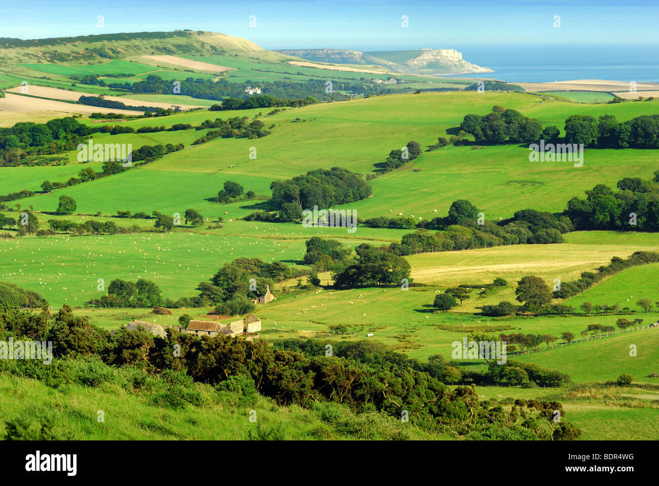 Purbeck Hills in the summertime Dorset UK - Stock Image