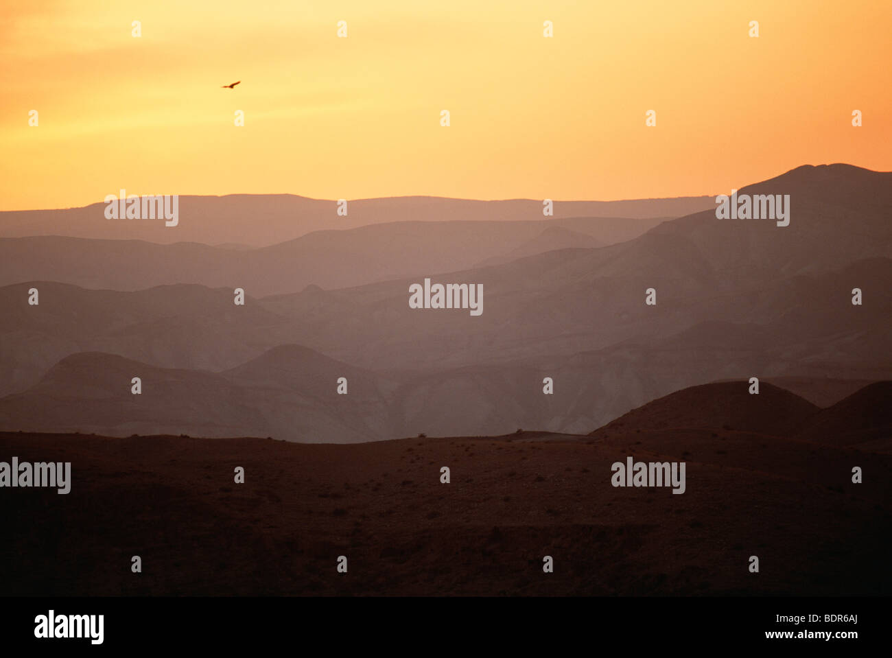 Bird flying over desert landscape Israel. - Stock Image