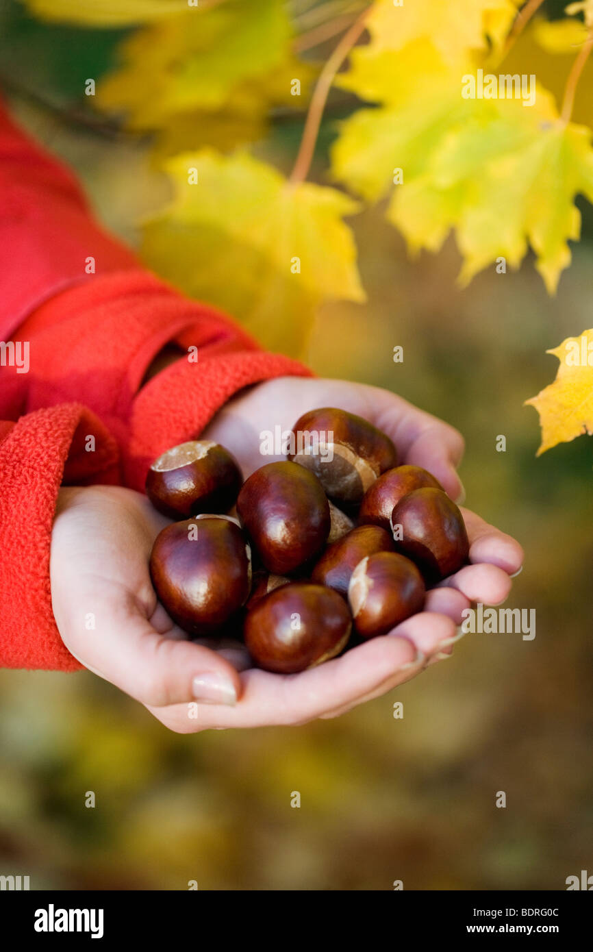 A woman holding chestnuts Sweden. - Stock Image