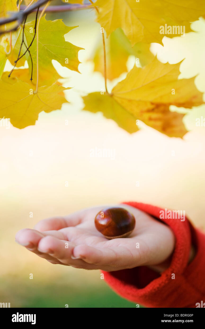 A woman holding a chestnut Sweden. - Stock Image