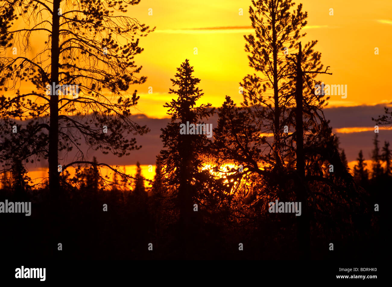 sonnenuntergang im moor, gaellivare, lappland, schweden, sunset at bog in lapland, sweden - Stock Image