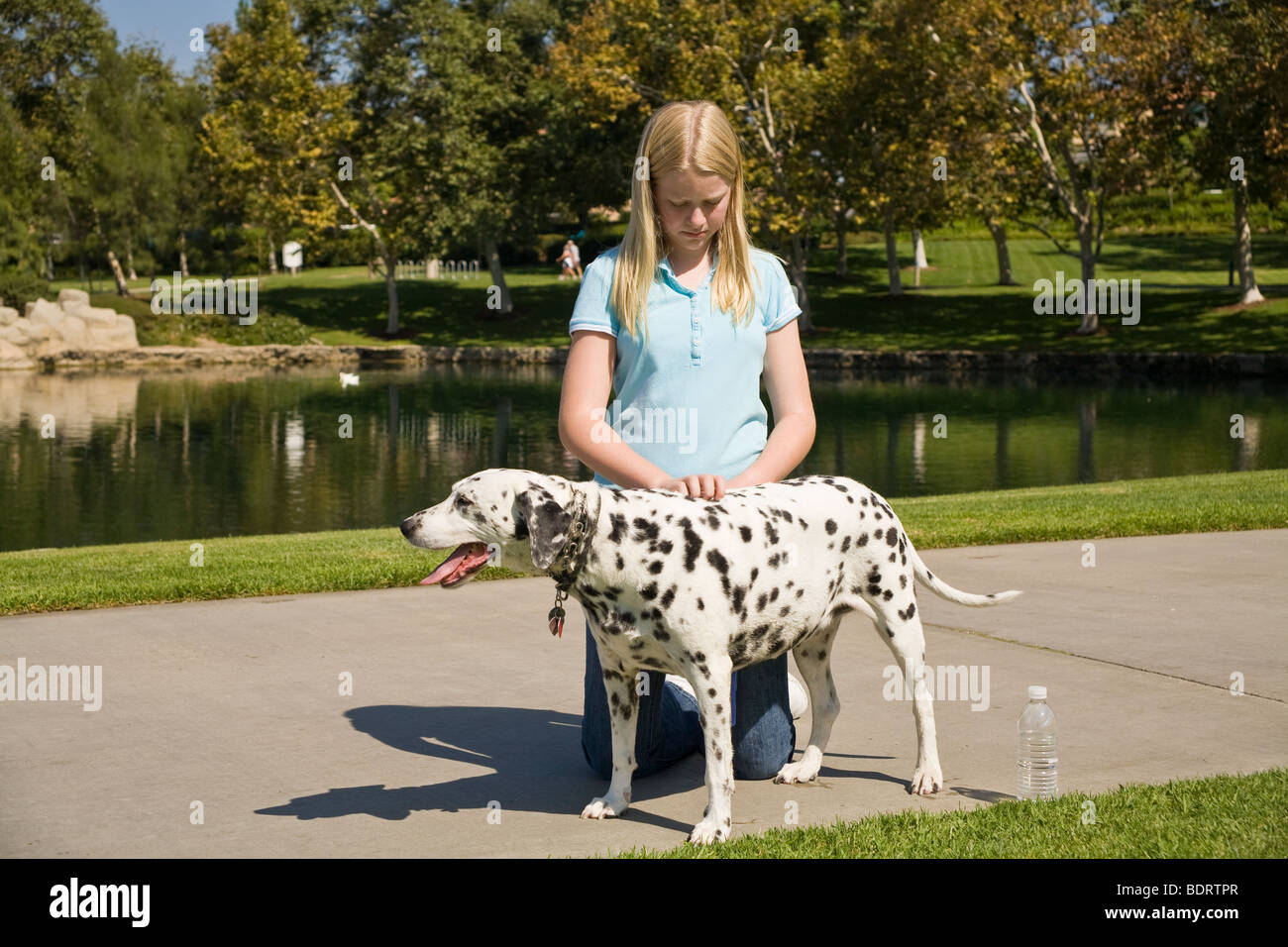 Caucasian 11-13 year old years age girl child playing play plays dog owner showing affection dalmatian dogs front - Stock Image