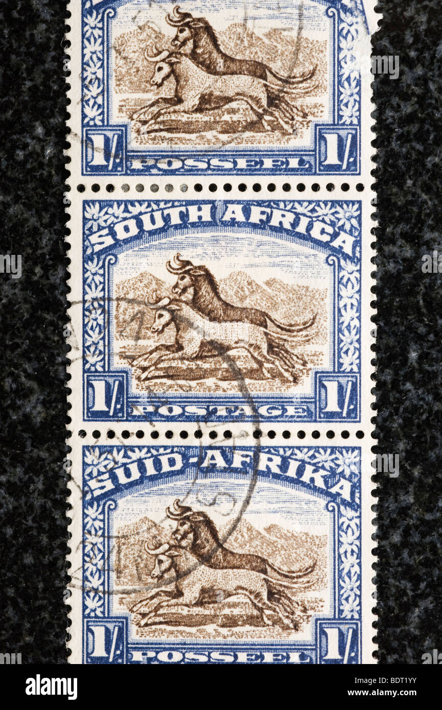 Strip of postage stamps South Africa, 1 shilling - Stock Image
