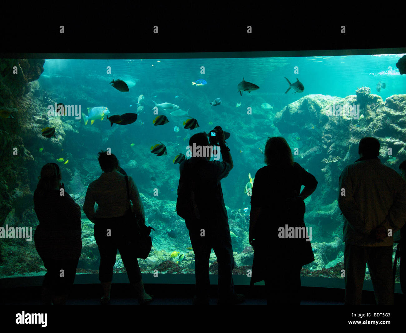 Tourists looking at a very large sea aquarium in Oceanopolis, Brest, Brittany, France - Stock Image