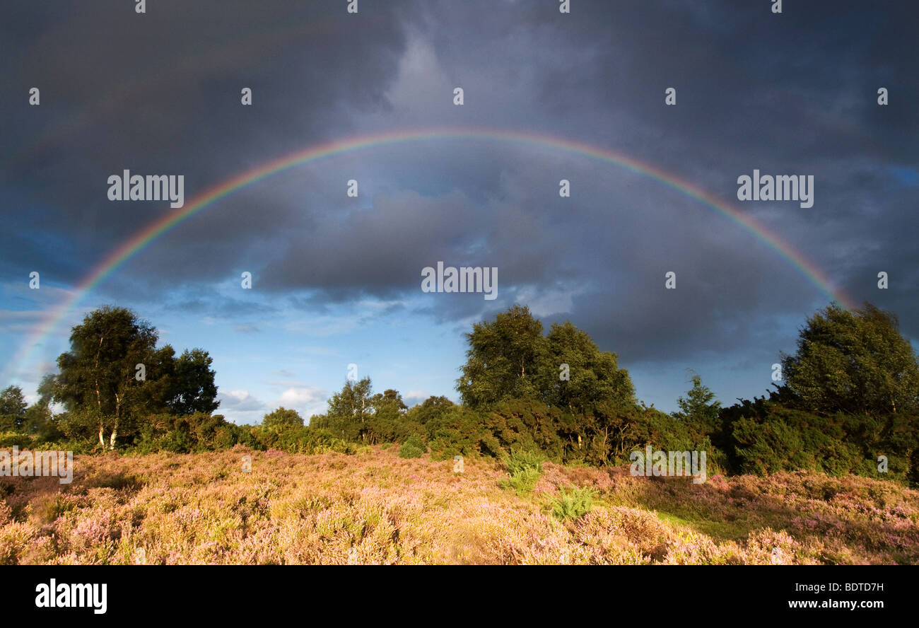 Rainbow at Rockford Common in the New Forest National Park - Stock Image