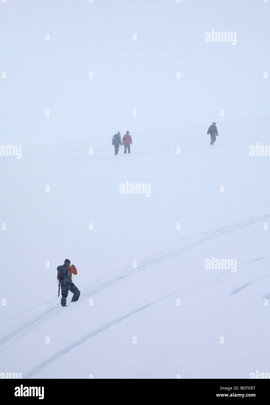 Tour expedition leader recalls tourists from snow covered mountainside as a blizzard sets in, Neko Harbour, Antarctic - Stock Image