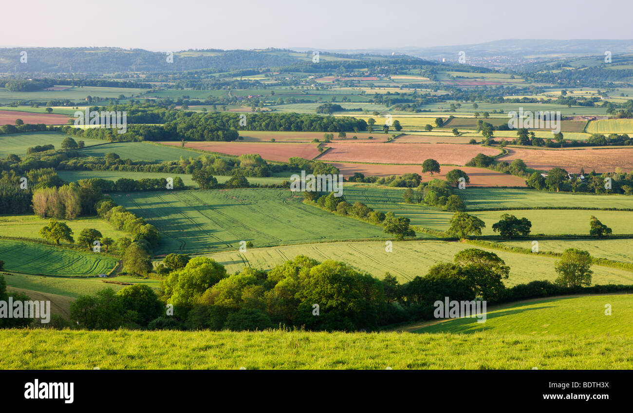 Rolling farmland on the outskirts of Exeter, Devon, England. Summer (June) 2009 - Stock Image