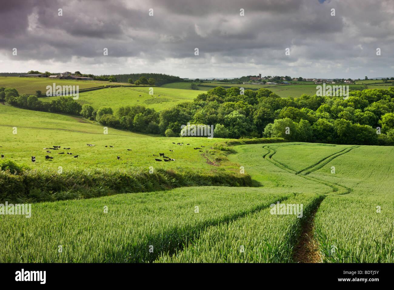 Farmland in summertime, Morchard Bishop, Devon, England. Summer (June) 2009 - Stock Image
