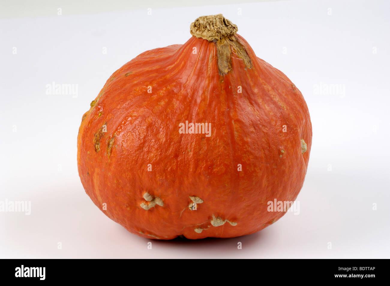 Pumpkin, Speisekuerbis, Hokkaido Cucurbita pepo, Kuerbis, Gartenkuerbis Stock Photo