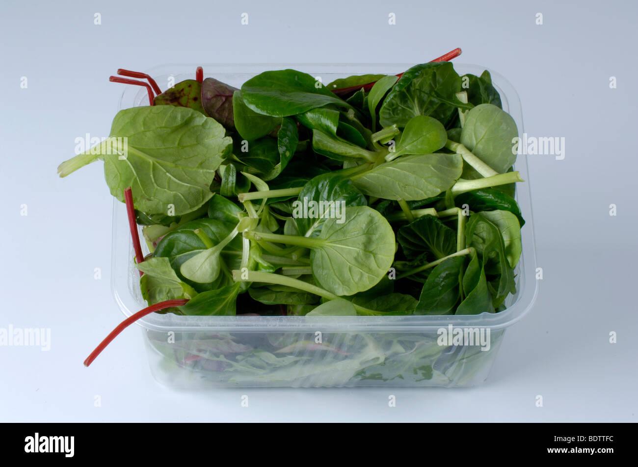 Salad , Salat - Stock Image