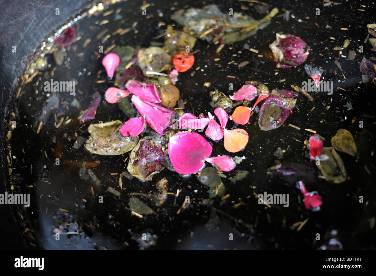 flower petals on water - Stock Image