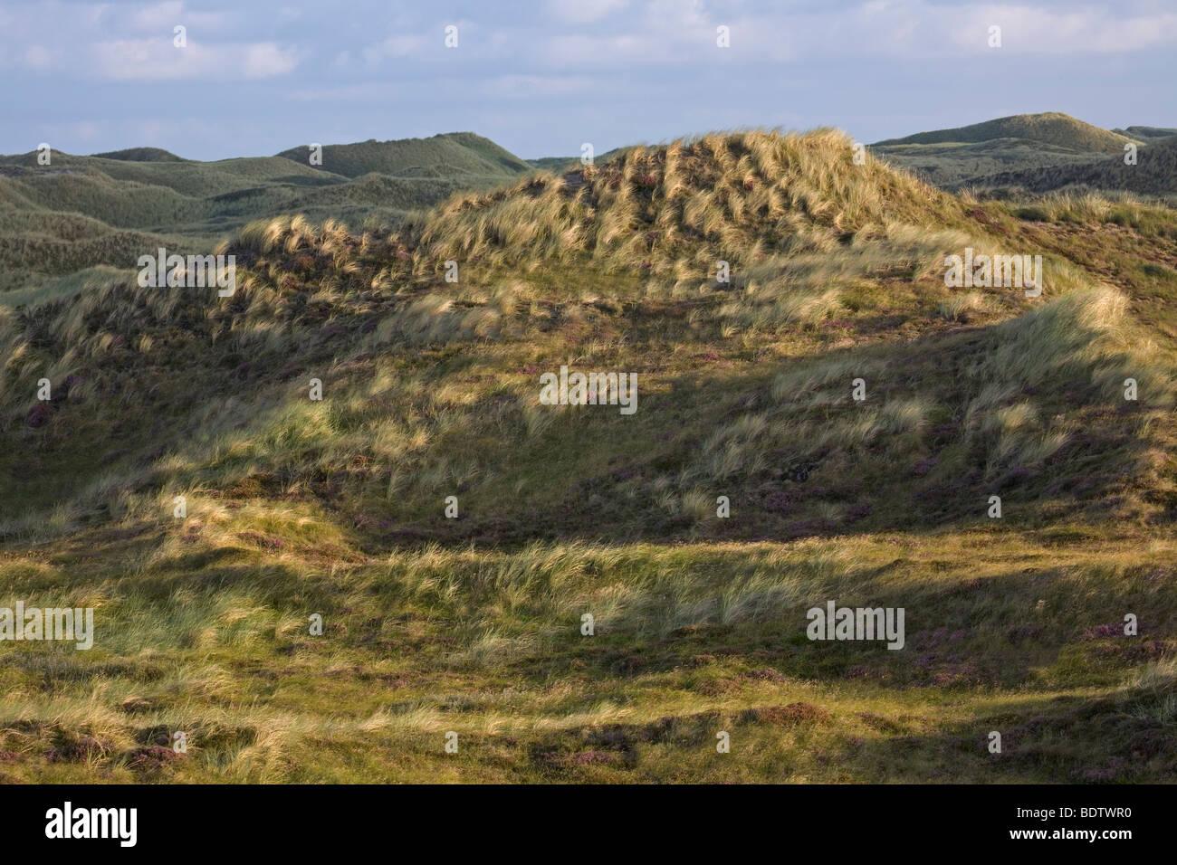 Duenenlandschaft, Dune scenery / Jylland - Denmark Stock Photo