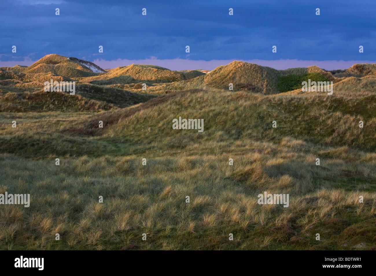 Duenenlandschaft, Dune scenery / Jylland - Denmark - Stock Image