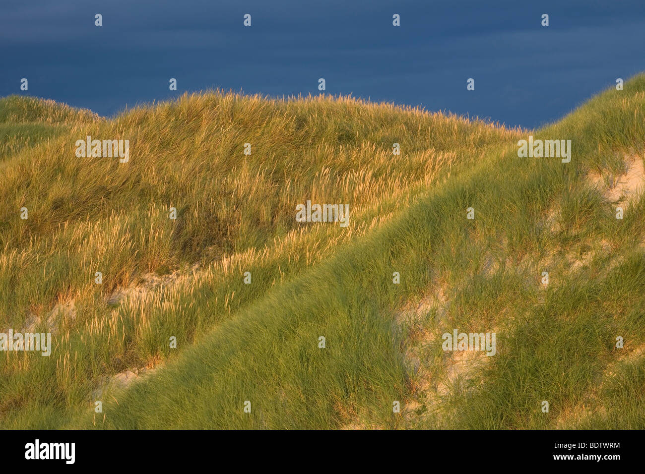 Duenenlandschaft / Dune (dene) scenery / Jylland - Daenemark Stock Photo