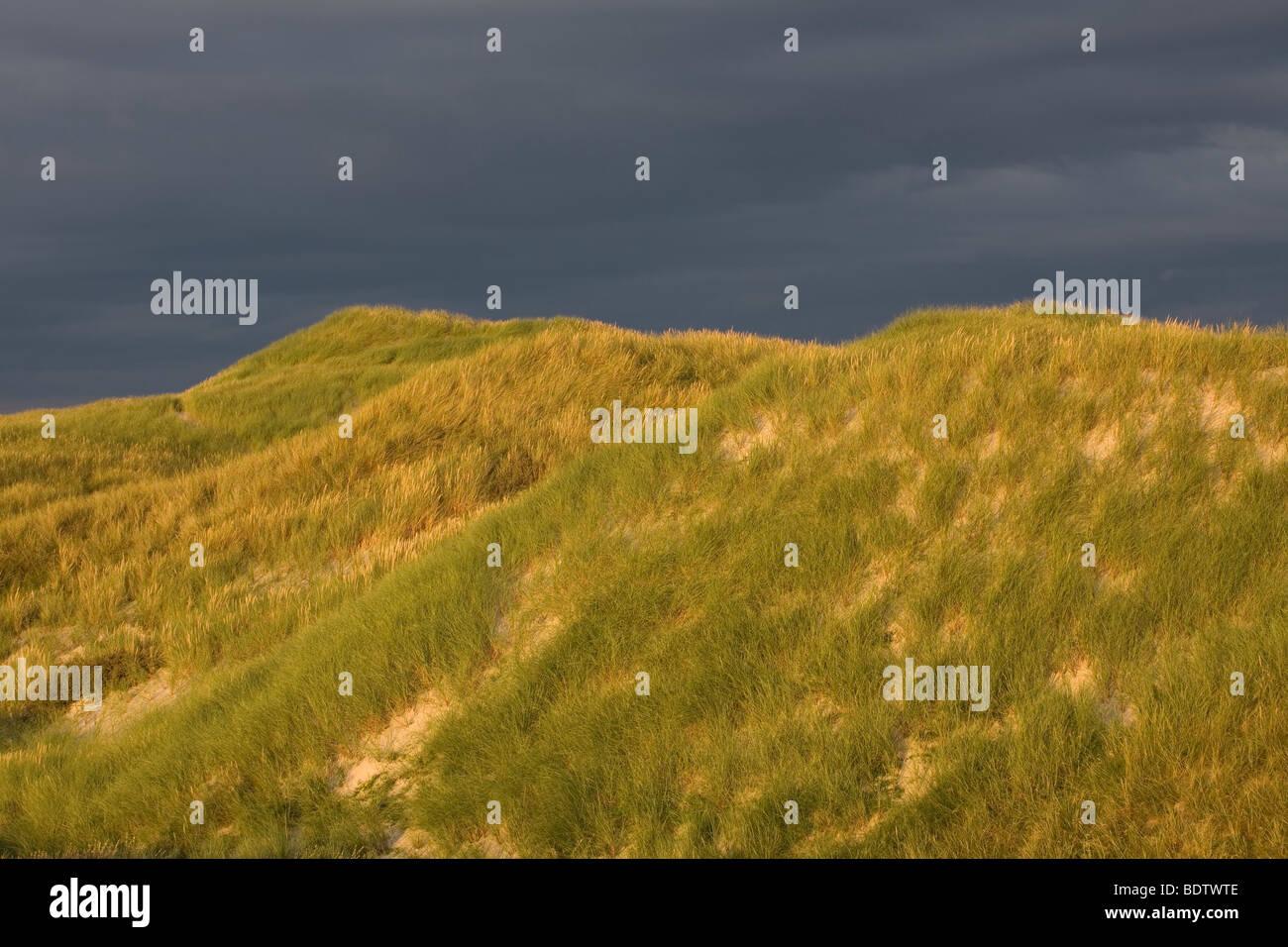 Duenenlandschaft, Dune (dene) scenery, Jylland - Daenemark Stock Photo