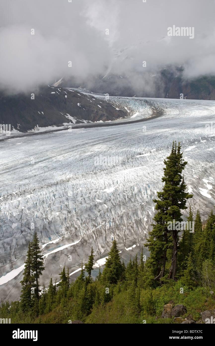 Salmon-Gletscher & Sitka-Fichten / Salmon-Glacier & Sitka Spruce / Picea sitchensis - Stock Image