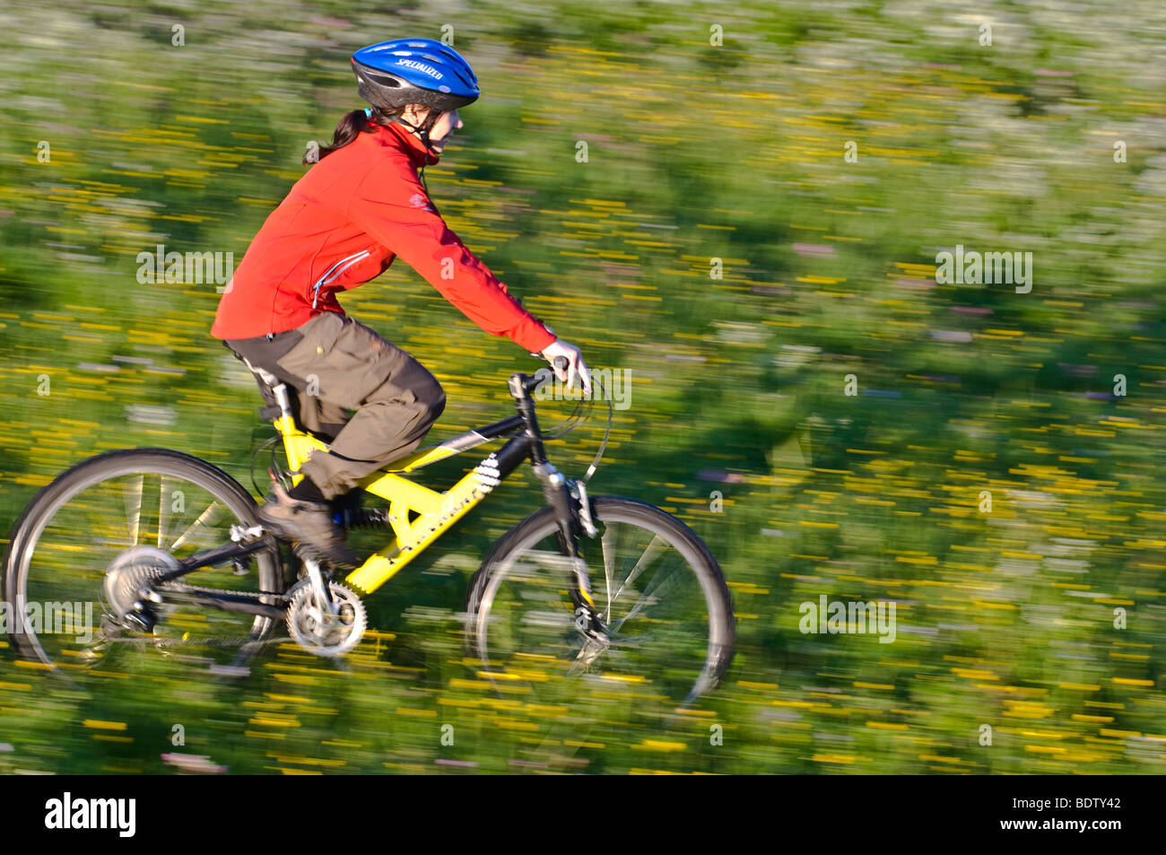 downhill cyclist rides through flower meadow, lapland, sweden Stock Photo