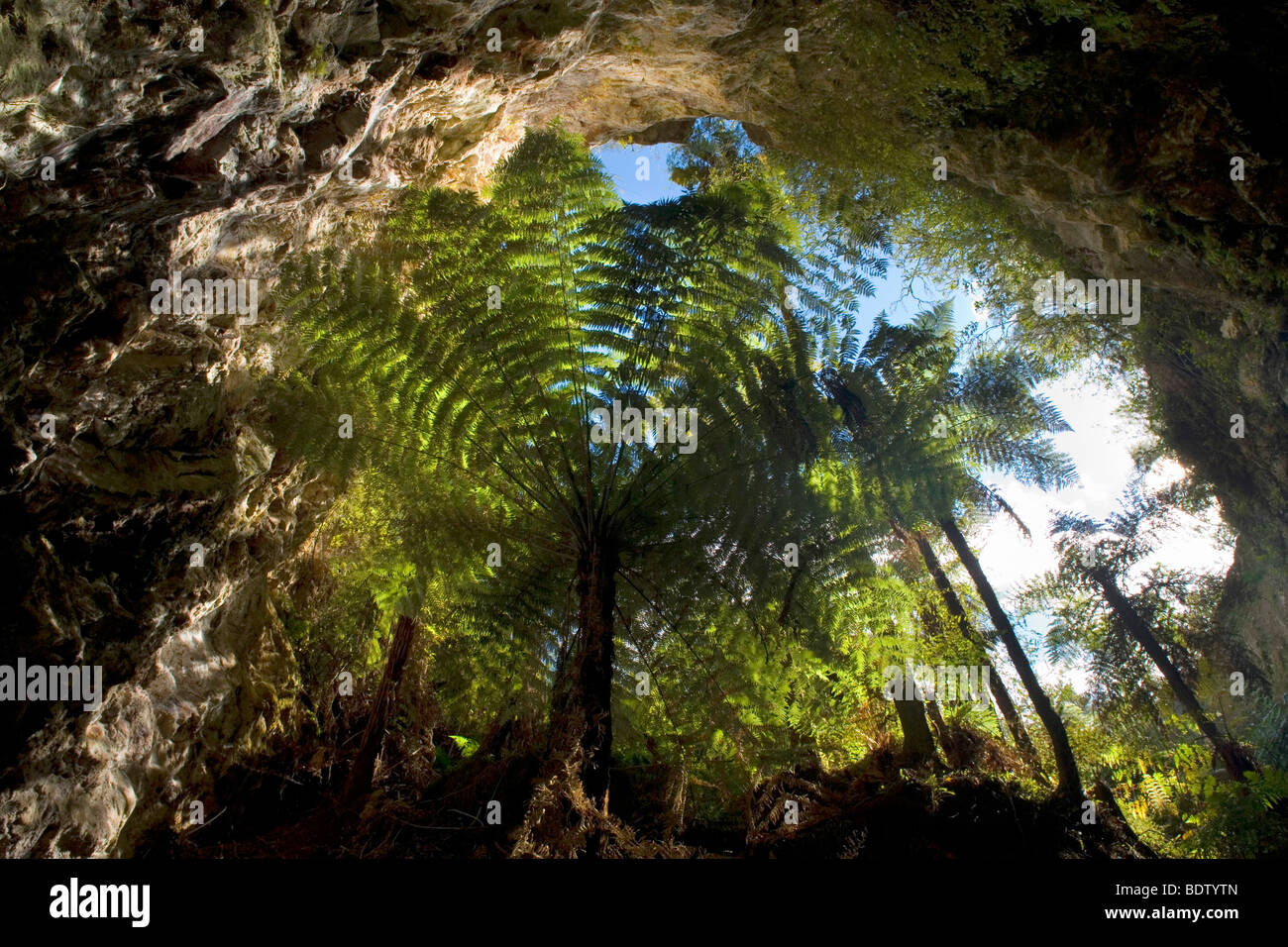 view from sacred cave, Waikato, North Island, New Zealand - Stock Image